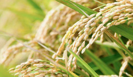 『玄米じゃぱん』の開発の経緯について